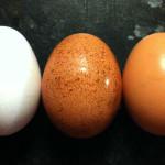 Acham que sabem tudo sobre os ovos? | Healthy Mondays