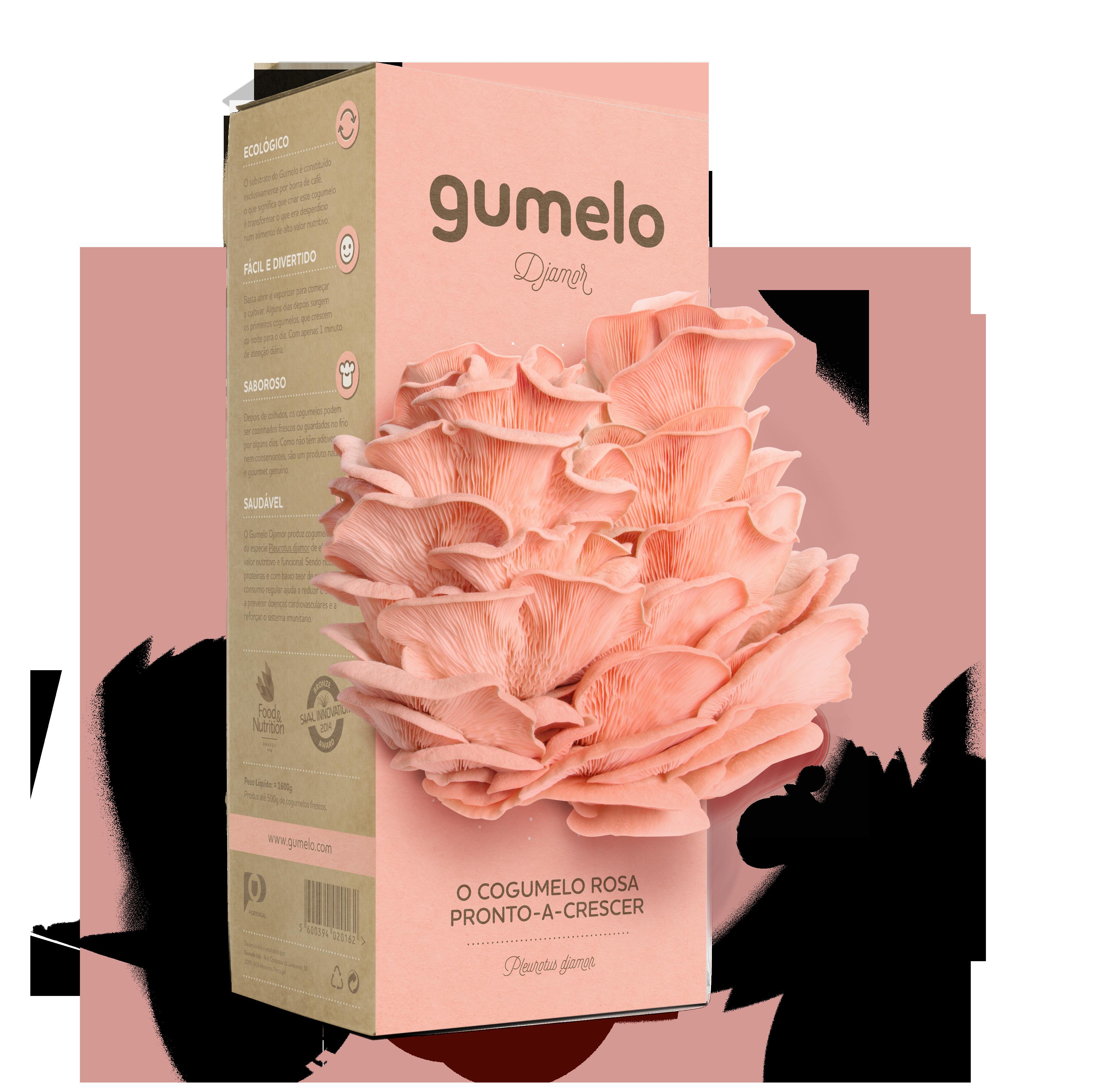 Gumelo_Djamor