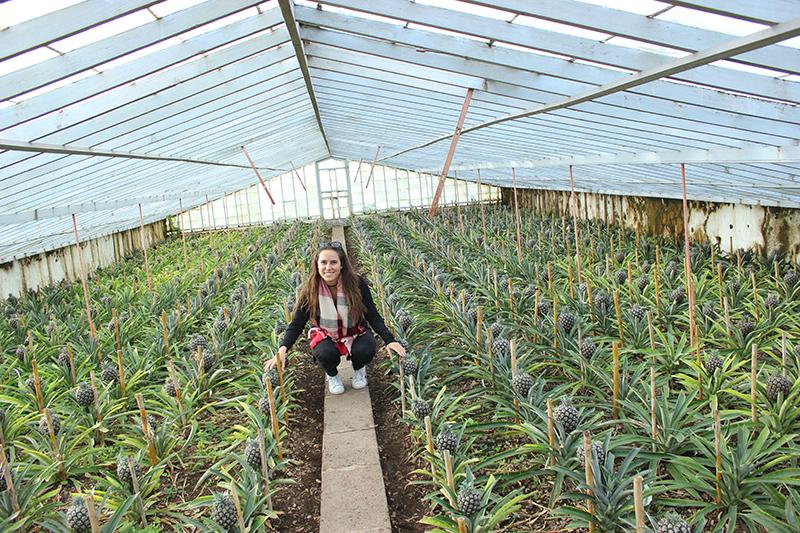 Estufas de ananases A Arruda na Fajã de Baixo, Açores