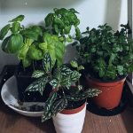 Bárbara e o mundo das plantas